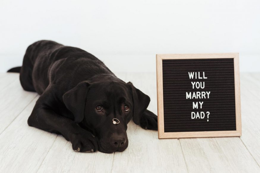romantic ways to propose: Black dog lying on the floor with a ring on his nose and letter board with proposal message beside him